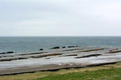 在西部海湾的海岸的Turbidites在冰岛 图库摄影
