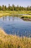 在西部黄石,美国附近的麦迪逊河 图库摄影