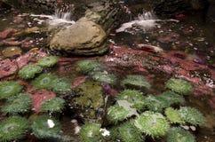 在西雅图水族馆的海葵 库存照片
