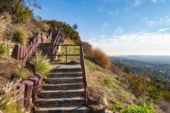 在观察台的台阶好莱坞Hills的 日观察的猫坐温暖晴朗的结构树 在蓝天的美丽的云彩 免版税图库摄影