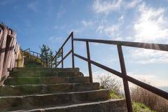 在观察台的台阶好莱坞Hills的 日观察的猫坐温暖晴朗的结构树 在蓝天的美丽的云彩 图库摄影