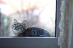 在视窗的小猫 免版税库存照片