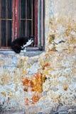 在视窗的猫 库存照片
