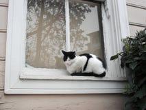 在视窗的猫 图库摄影