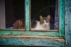 在视窗的猫 库存图片