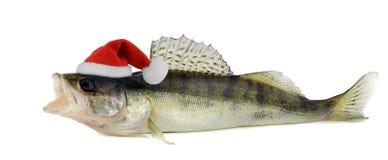 在角膜白斑的圣诞老人帽子 库存图片