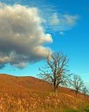 在触毛cumulous和双突透镜的云彩下的树在早期的春天在中央加利福尼亚 库存照片