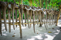 在詹姆斯庞德海岛,泰国上的种族篱芭 免版税库存图片