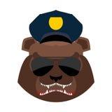 在警察盖帽的恼怒的熊 积极的北美灰熊头 野生动物m 库存照片