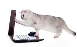 在计算机上的英国shorthair猫 免版税图库摄影