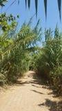 在许多之间的一串足迹在光秃的道路的长的藤茎波兰人在河岸,以色列的8月阳光下 库存照片
