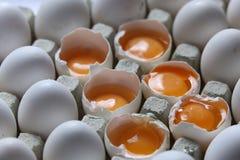 在许多白鸡蛋中的卵黄质 免版税库存图片