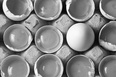 在许多白鸡蛋中的卵黄质 库存照片