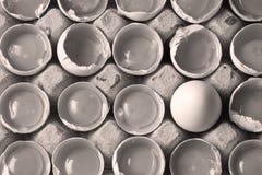 在许多白鸡蛋中的卵黄质 图库摄影