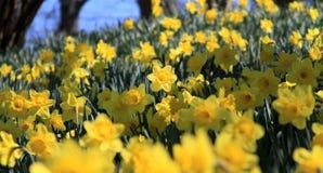 在许多的人群的一朵花 库存照片