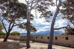 在设防的墙壁上的三棵大杉树 免版税图库摄影