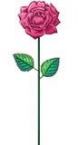 在词根的一朵桃红色玫瑰 库存图片