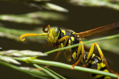 在词根的昆虫 库存照片