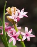 在词根的桃红色花与在黑和棕色背景的绿色稀薄和长的叶子 库存照片
