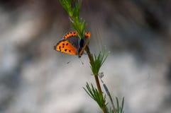 在词根的蝴蝶 免版税库存照片