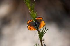 在词根的蝴蝶 免版税库存图片