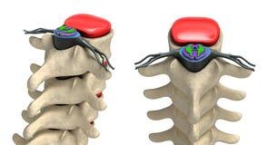在详细资料的人力脊椎: 椎骨,骨髓 库存例证