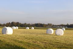 在说谎在农田的白色塑料的圆的干草捆 免版税库存照片