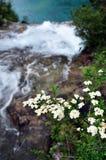 在谷上的花在九寨沟风景名胜区名胜的山 图库摄影