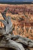 在谷上的死的木头 库存照片