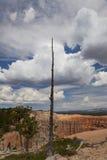 在谷上的死的树 库存照片