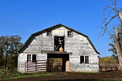 在谷仓的草料棚门的万圣夜骨骼 库存照片