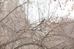 在谷树的一只冬天鸟  免版税库存照片