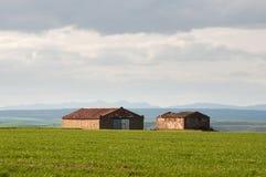 在谷物领域的农厂村庄与的蓝天云彩 免版税库存照片
