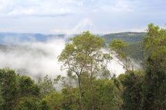 在谷的云彩在Tamborine山国家公园,澳大利亚 免版税库存图片