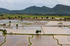 在谷的米领域 免版税库存照片