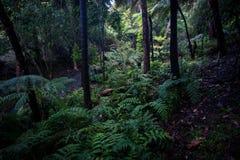 在谷的蕨在登上崇高植物园 免版税库存图片