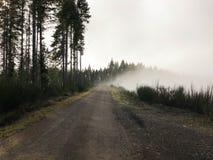在谷的雾与山 库存图片