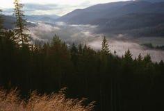 在谷的雾 免版税库存图片