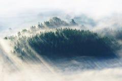 在谷的雾 库存图片