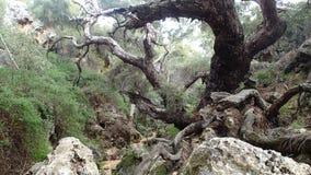 在谷的结构树 库存照片