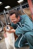 在谷仓前面的交配动物者爱犬 免版税图库摄影