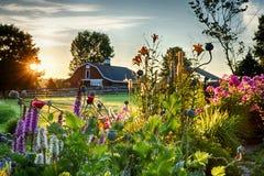 在谷仓和花园的夏天日出 库存图片