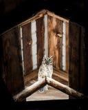 在谷仓栖息的猫头鹰 库存图片