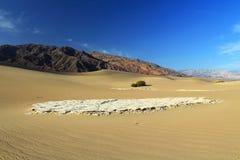在豆科灌木平的沙丘的坚硬平底锅在Panamint范围的脚,死亡谷国家公园,加利福尼亚 库存图片