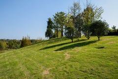 在象草的小山顶部的树在晴朗的冬天下午 库存图片