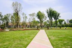 在象草的草坪的镶边具体道路在晴朗的夏天 库存照片