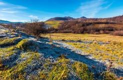 在象草的草甸的早晨树冰山的 免版税库存照片