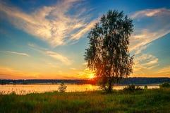 在象草的银行河日落的伏尔加河俄罗斯的桦树 免版税图库摄影