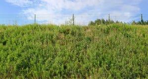 在象草的青山顶部是篱芭由金属mes做成 库存图片
