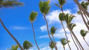 在豪华海滩的步行 股票录像